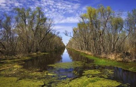 Wetlands Advocacy Art