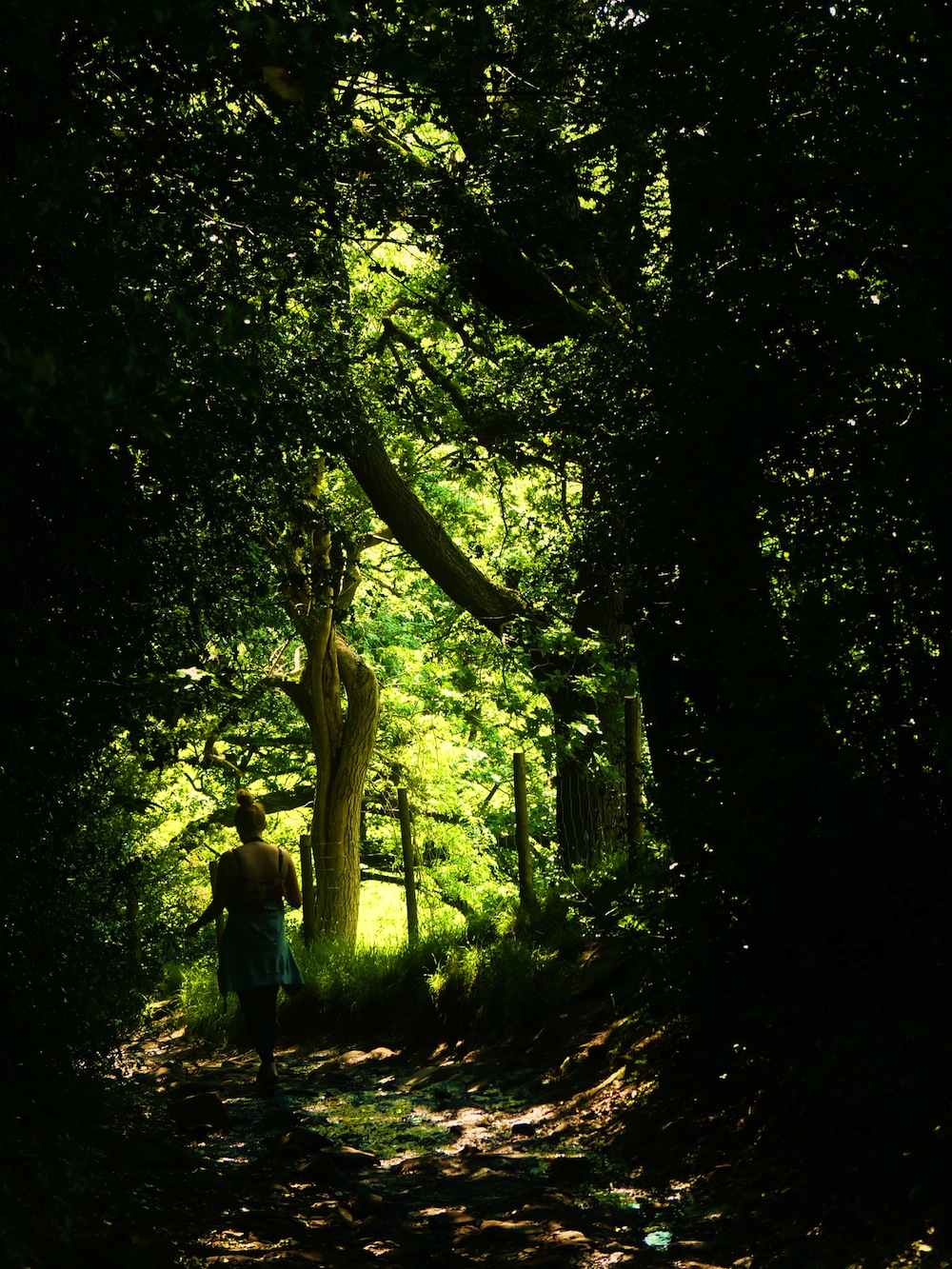 eleanor bennett photo of nature path